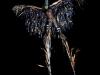 "A masquerader in a ""Moko Jumbie"" (stilt walker) costume."