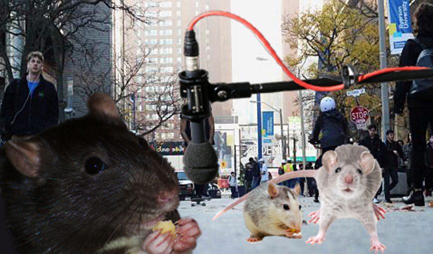 Rats! SARAH KRICHEL | EYERSONIAN