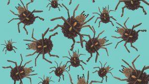 Illustration of bedbugs.