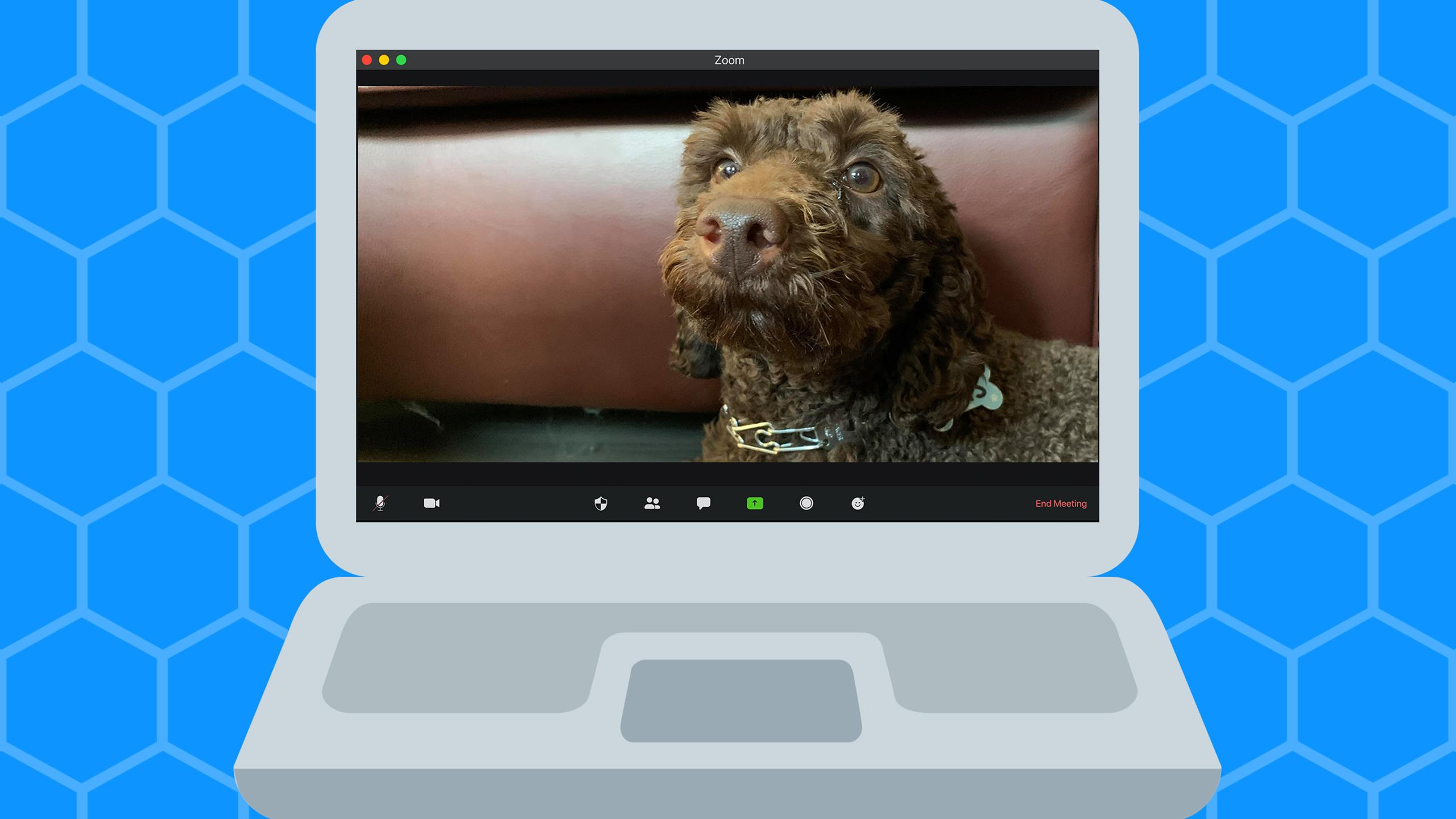 Very very cute dog on Zoom