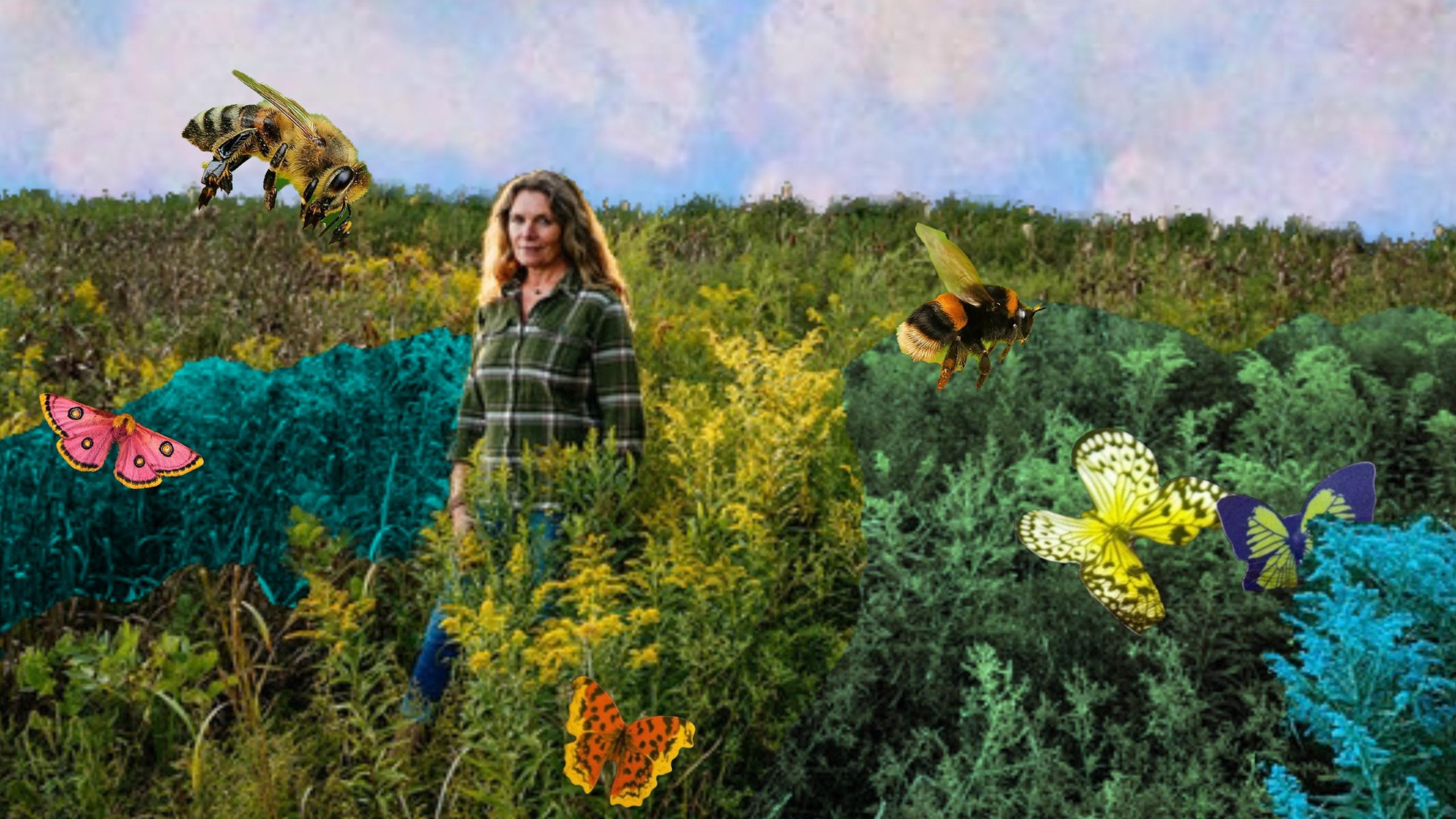 Collage of a professor Nina-Marie Lister standing in a field with bumblebees and butterflies.